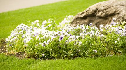 Landscaping in the green garden