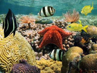 Garden of coral