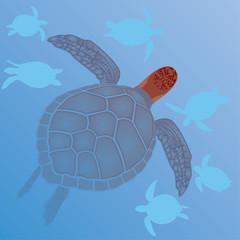 Sea turtles in the water