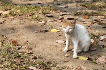 cat sitting on ground