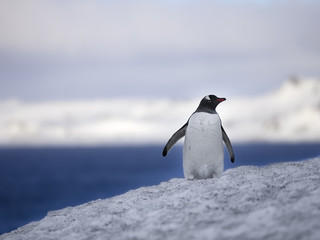 view of a penguin on snow