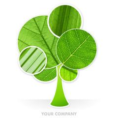 my company vegetal arbre