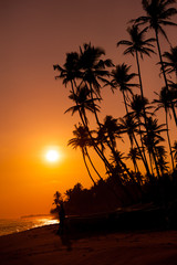 Wall Mural - Beautiful tropical sunset