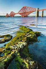Fond de hotte en verre imprimé Pont The Forth Road Bridge and seaweed