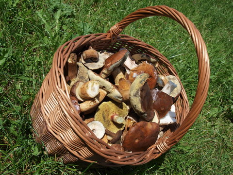 Small basket with mushrooms