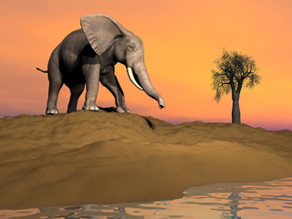 Thisty elephant