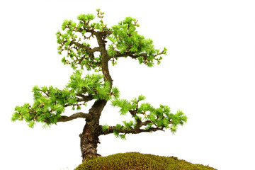 Fir tree in the middle of nature with branches and grass green