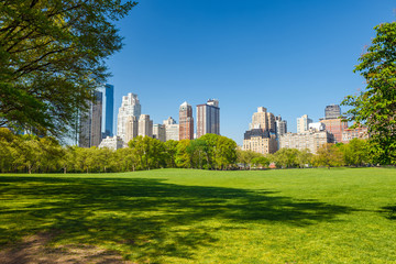 Wall Mural - Central park at sunny day