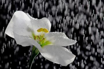 Flower and rain.