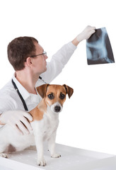Vet with dog is holding X-ray image.