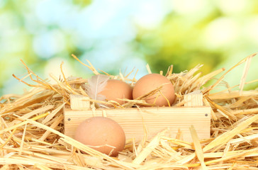 brown eggs in a wooden box on straw on green background