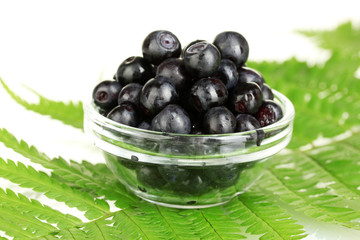 Transparent bowl with ripe blueberries on fern close-up