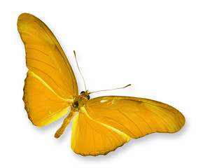 ิYellow Butterfly