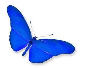 ิBlue Butterfly