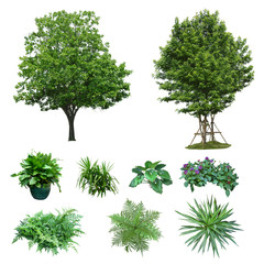 Collection tree plant isolated on white background