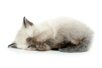 Kitten laying down