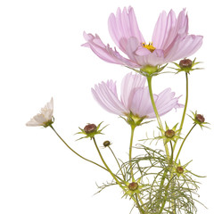 Decorative beautiful pink flower