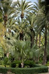 Huerto del Cura botanic garden,Elche, Alicante province, Spain