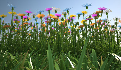 Flowers of different colors, in a grass field.