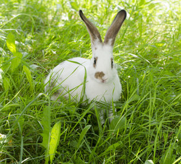 Bunny sitting in the grass