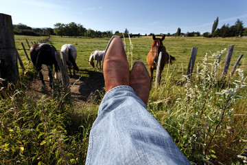horses and boots
