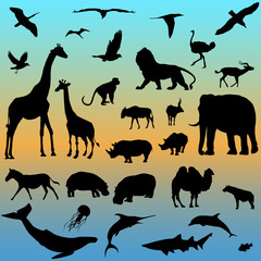 vector set of animals collection