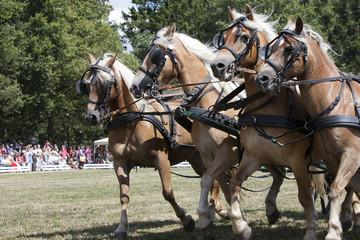 Pferde Vierergespann Kutsche