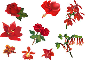 set of red flowers on white