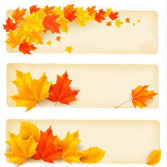 Wall Mural - Three autumn banners with colorful leaves  Vector