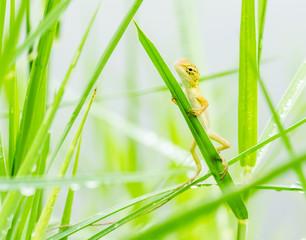 lizard hiding on fresh leaves  green grass