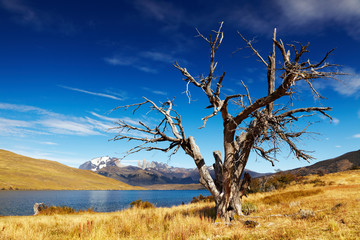 Wall Mural - Laguna Azul, Patagonia, Chile