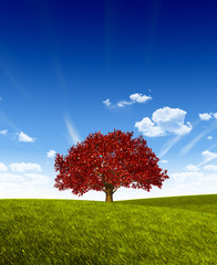 Red Tree on Green Land.