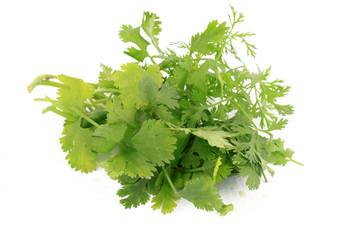 Bunch of cilantro or coriander