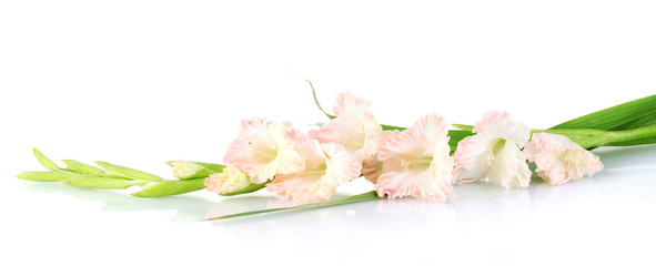 branch of pale pink gladiolus on white background close-up
