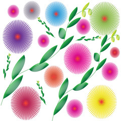 Flower of frame on white background