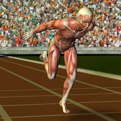 Wall Mural - Muskelaufbau männlicher Sportler