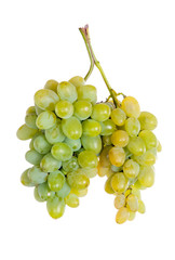 Bunch of white grapes . isolate