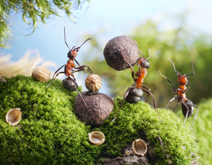 ants crack nuts with stone. hands off, blockhead! ant tales