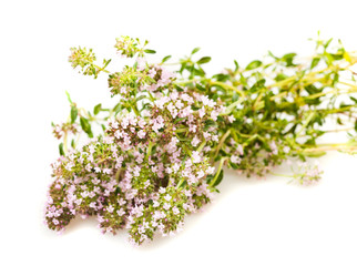 Wild thyme flowers