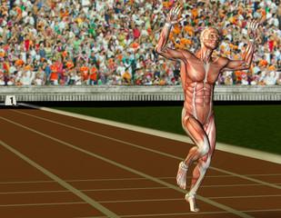 Wall Mural - Muskelaufbau männlicher Sportler beim Zieleinlauf