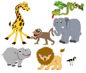 Jungle Animals from around the world