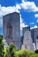 Fotomurales - Végétation de Central Park à New York.