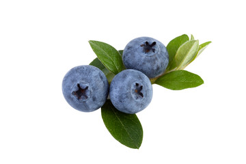blueberries isolated on white, close up