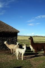 ペルーの田舎