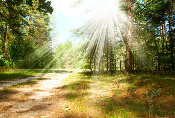 Fototapete - Forest