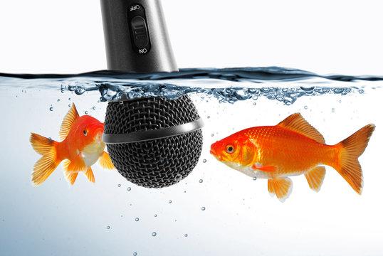 Ohne Worte - Fische vor Mikrofon