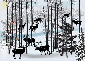 deers in white winter landscape