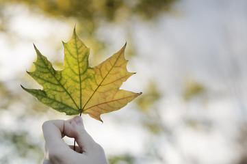 Girl holding maple leaf in autumn park