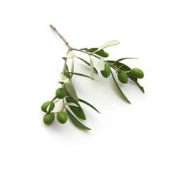 isolierter olivenzweig.