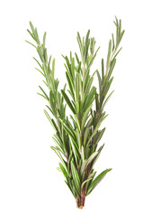 Twigs of rosemary isolated on white
